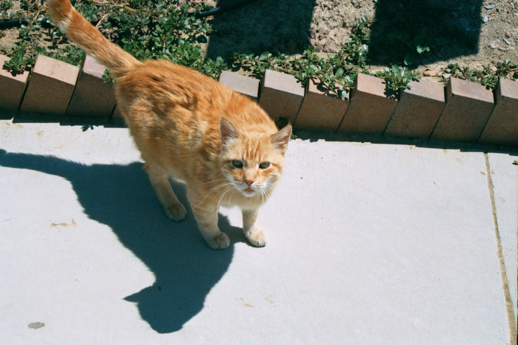 Budhha the cat