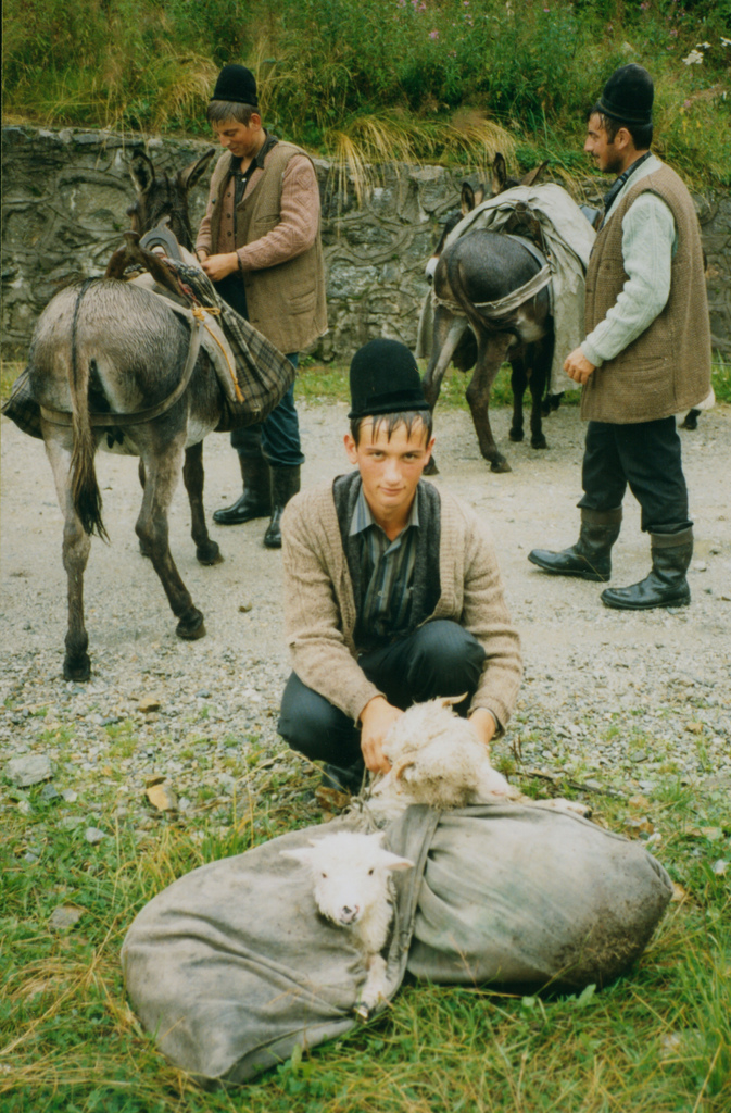 shepherding one