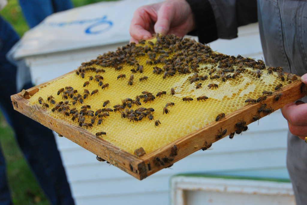 lessons in beekeeping