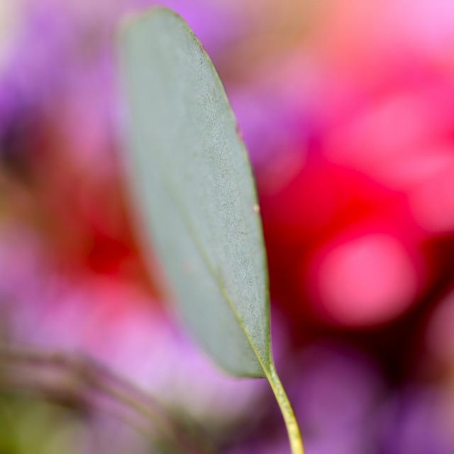 leaf in focus