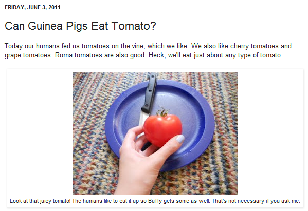 can guinea pigs eat tomatoes?