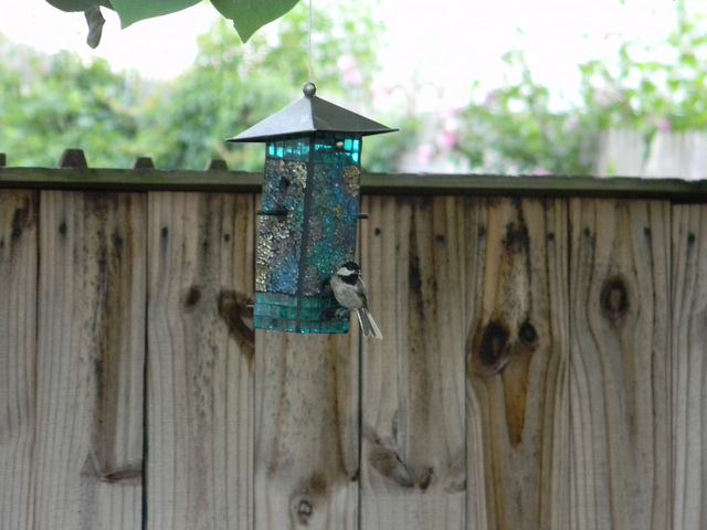 bird on birdfeeder