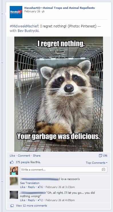 Havahart Raccoon