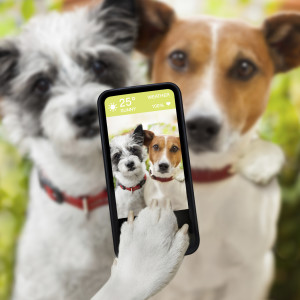 doggie selfie
