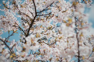 Monday Roundup: Spring Cleaning Your Strategy