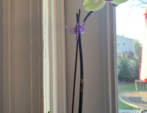 Lessons in Pandemic Patience From an Orchid