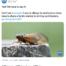 FDA tweet about cicadas and shrimp